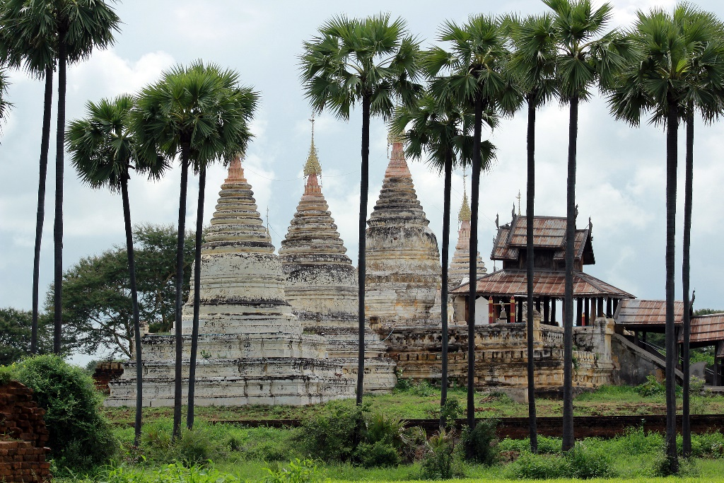 Bagan Temples under Palm Trees